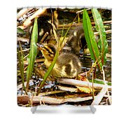 Ducklings 1 Shower Curtain
