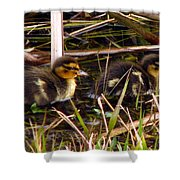 Ducklings 2 Shower Curtain