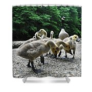 Ducklings Shower Curtain by Bill Cannon