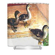 Ducklings Come To Visit Shower Curtain