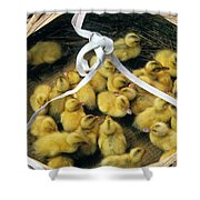Ducklings In A Basket Shower Curtain