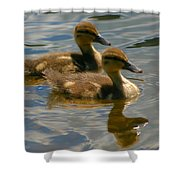 Ducklings Shower Curtain