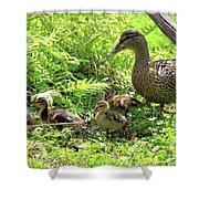 Ducklings Through The Ferns Shower Curtain