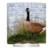 Ducks And Geese 2 Shower Curtain