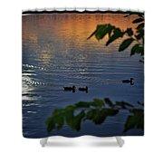 Ducks At Daybreak  Shower Curtain