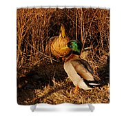 Ducks At Dusk Shower Curtain