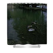 Ducks In A Pond Shower Curtain