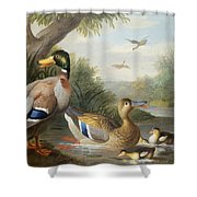 Ducks In A River Landscape Shower Curtain