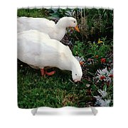 Ducks In The Garden At The Shipwright's Cafe Shower Curtain