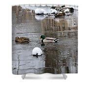 Ducks In Winter Shower Curtain