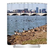 Ducks Of The Potomac Shower Curtain