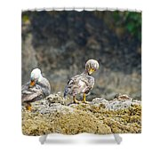 Ducks On A Rock Shower Curtain