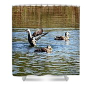 Ducks On Colorful Pond Shower Curtain