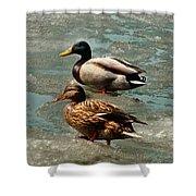 Ducks On Ice Shower Curtain
