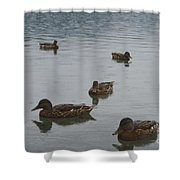 Ducks On Lake Bled Shower Curtain