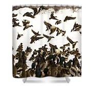Ducks On The Move Shower Curtain
