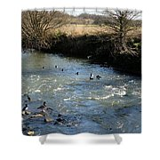 Ducks On The River In Early Spring Shower Curtain
