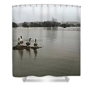 Ducks Shower Curtain