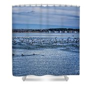 Ducks Taking Off Shower Curtain