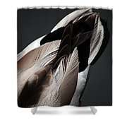 Ducktail Shower Curtain