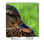 Ducky Up Close And Personal Shower Curtain