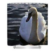 Duddingston Swan 13 Shower Curtain