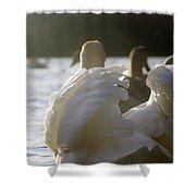 Duddingston Swan 16 Shower Curtain