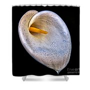 Dew Drops On Silver White Calla Lily  Shower Curtain