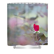 Duel Toned Ethereal Rose Bud Shower Curtain