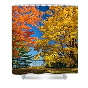 Dueling Maples Shower Curtain