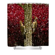 Dueling Woodpeckers Shower Curtain