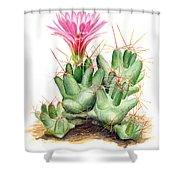 Dumpling Cactus Shower Curtain