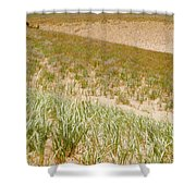 Dune Grass Shower Curtain
