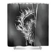 Dune Grass - Paint Bw Shower Curtain