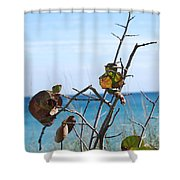 Dune Plants Shower Curtain