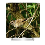 Dunnock In A Hedgerow Shower Curtain