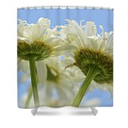 Duo Daisy Shower Curtain