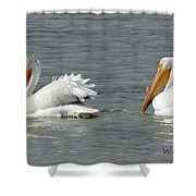 Duo Pelicans Shower Curtain