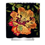 Durango Outback Mix 02 - Photopower 3200 Shower Curtain