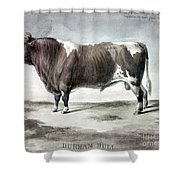 Durham Bull, 1856 Shower Curtain