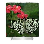Durham Butterfly #5 Shower Curtain