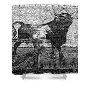 Durham's Bull Shower Curtain