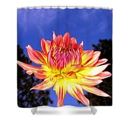 Dusk And A Dahlia Shower Curtain