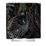 Dusky Lady  Shower Curtain