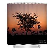 Dusky Tree Shower Curtain