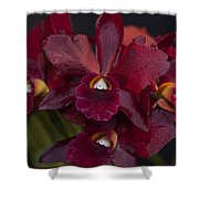 Dusty Red Orchid Shower Curtain