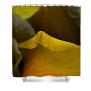 Dutch Iris Bronze Beauty 2 Shower Curtain