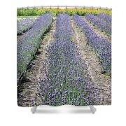 Dutch Lavender Field Shower Curtain