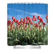Dutch Tulips Second Shoot Of 2015 Part 10 Shower Curtain