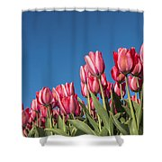 Dutch Tulips Second Shoot Of 2015 Part 8 Shower Curtain